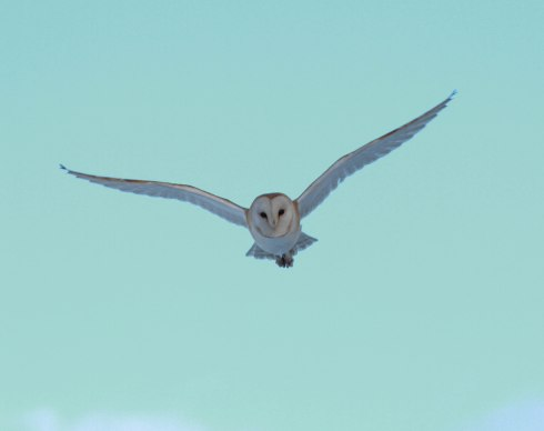 Barn Owl in Wassand - Jon Smith