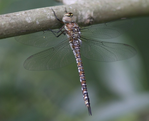 IMG_8730a