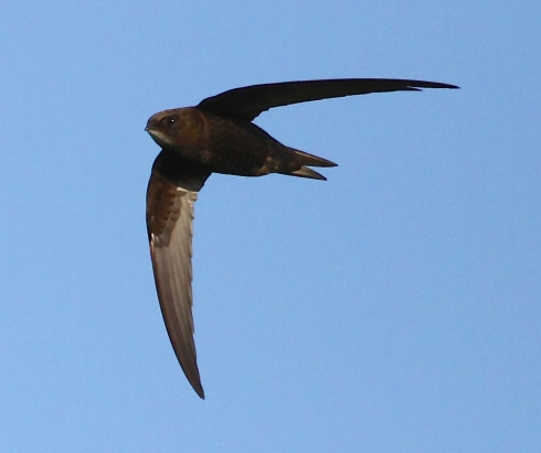 Common Swift over 2nd field