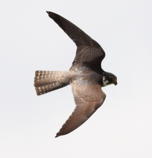 Hobby from the hide