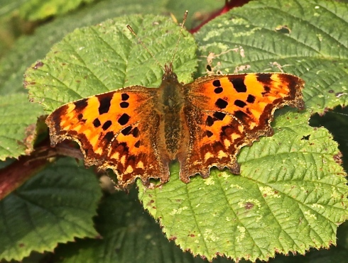 Comma in 1st field