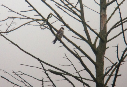 2nd bird favouring the Wood by the Wassand carpark