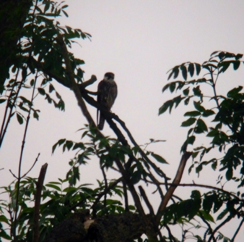 Hobby in area by the pines