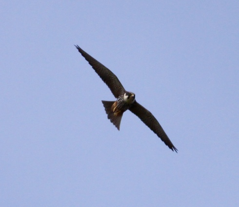 Hobby's today over the Southside