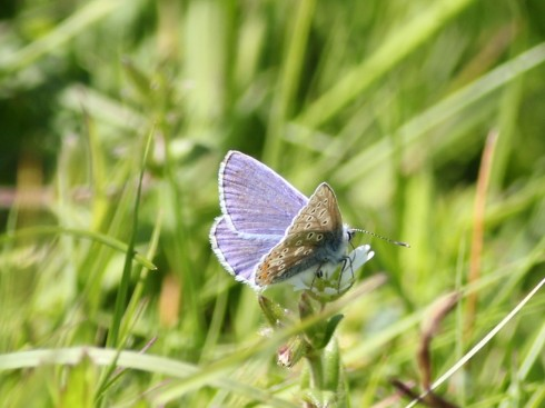 Common Blue - Jeff Cox