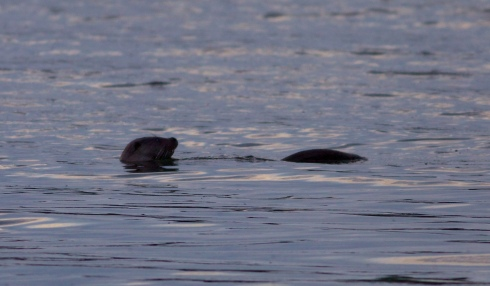 Otter performed for several minutes this evening