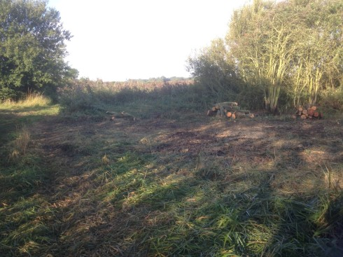 willows cleared (2)