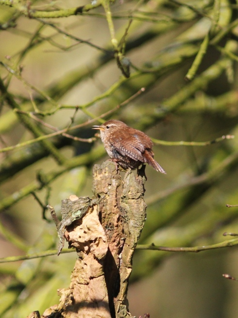 Wren in Wassand - Jeff Cox