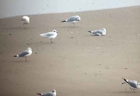 phonescoped ad Med Gull at Holmpton