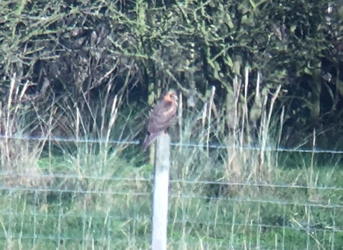 phonescoped at west end of Welwick Saltmarsh